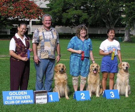 golden retriever rescue hawaii photos specialty novice b