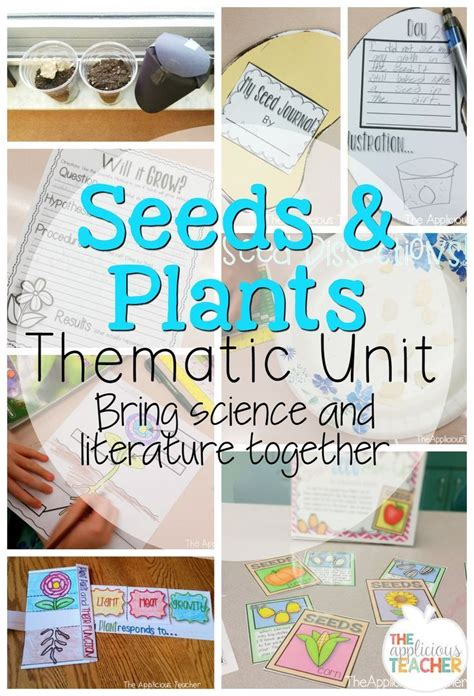 kindergarten themes and units 240 best images about unit planting and flowers on