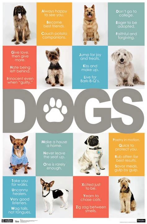 dogs poster 1000 images about personal brand on