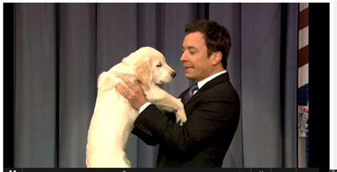 jimmy fallon puppies jimmy fallon s puppy predictions gary says romney will win the election