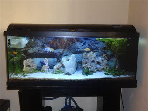 Aquarium 100 L by Cichlids Tank Exles New Decoration In My 100l