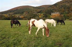 Country Farm House four horses grazing at lynch field exmoor riding 01643