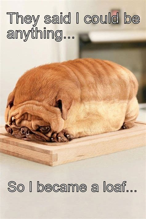 Pet Meme - i m a loaf dog what breed is it