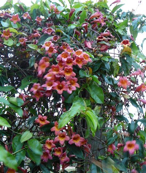 Native vs. Invasive Plants » Gardening in the Panhandle