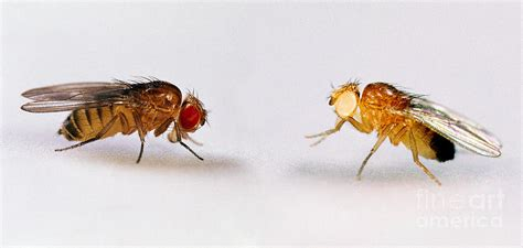 fruit flies in bedroom how do you get rid of flies in your house useful life