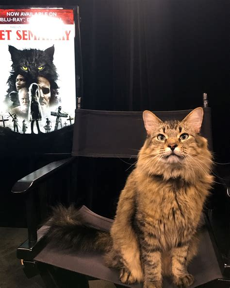 meet pet sematary trainer melissa millett  star cat