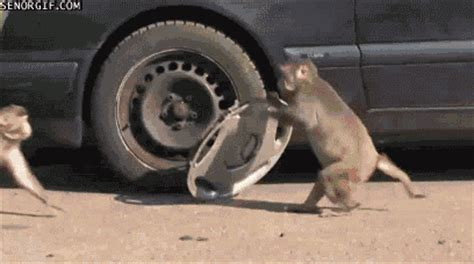 new year monkey animated gif animated car gifs find on giphy