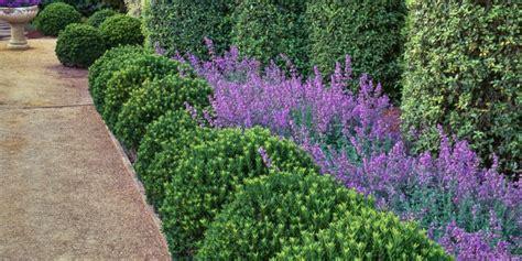image gallery summer plants