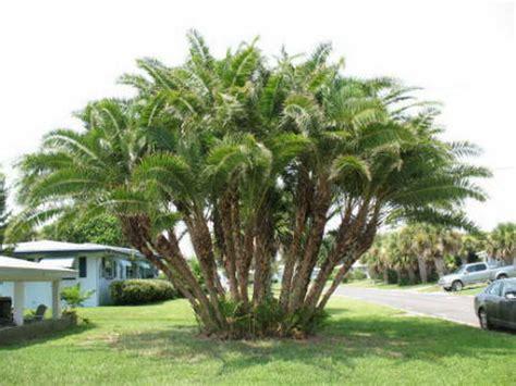 palm tree backyard backyard privacy wall large and beautiful photos photo