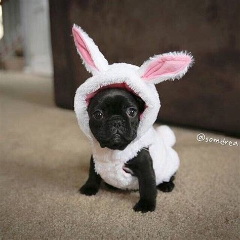 sheep pug 25 best ideas about puppies in costumes on puppies puppies