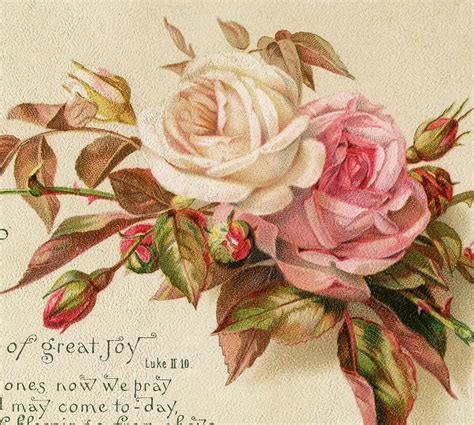 Vintage Christmas Roses Image!   The Graphics Fairy