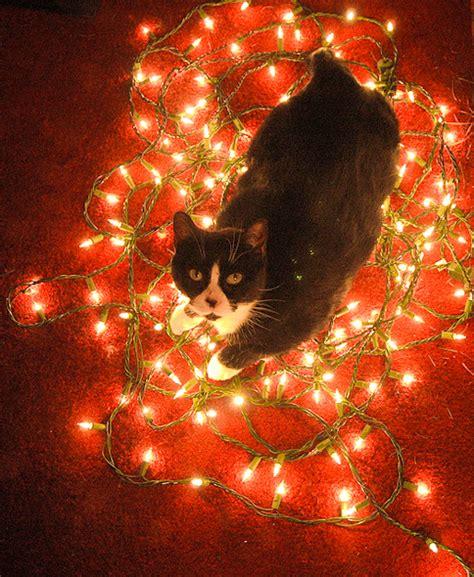 lights cat cat lights jpg 484 215 590 light