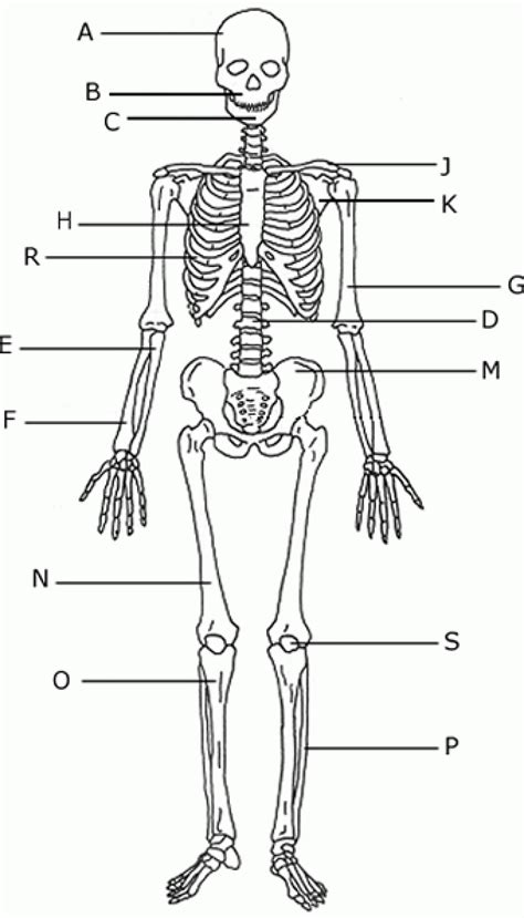 detailed skeletal system diagram unlabeled human skeleton diagram anatomy human
