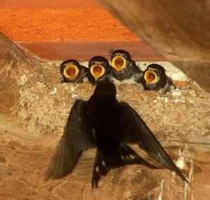 alimentazione uccelli giardinaggio la manutenzione giardino
