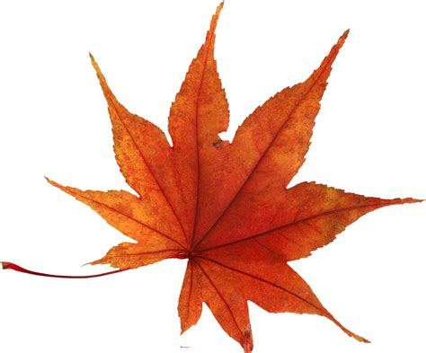Autumn Leaf autumn leaves png images free png yellow leaves pictures