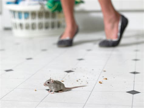 how to keep mice out of your house how to keep mice out of your kitchen exterminatorhamilton ca