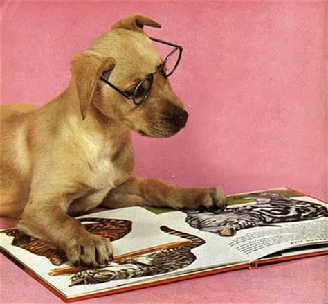 picture books about dogs s bookshelf bookish dogs reading books