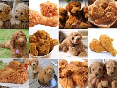 puppies that look like chicken zack s photos show dogs that look like food daily mail