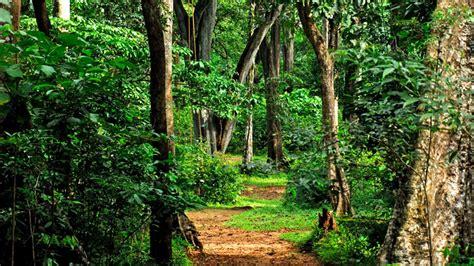 kumarakom bird sanctuary boating tamilnadu tourism sathyamangalam wildlife sanctuary and