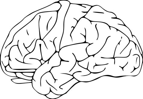 brain coloring page pdf clipart brain 03