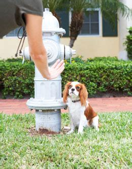 puppy potty regression puppy potty problems