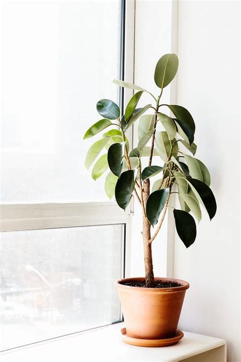 easiest indoor plants green thumb our favorite indoor plants to grow in your