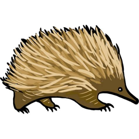 echidna clipart echidnas social skills helping aspie and high