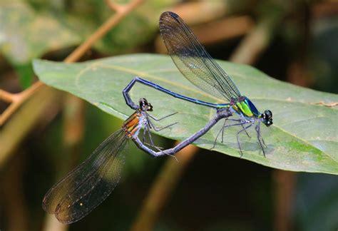 imagenes asombrosas facebook fotos las 10 nuevas especies m 225 s asombrosas del a 241 o