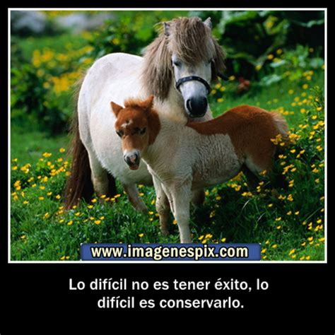 imagenes romanticas con caballos frases clebres relacionadas con caballos tattoo design bild
