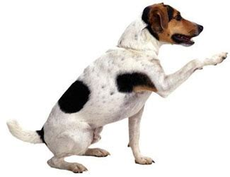 how to discipline a puppy for biting behavioral problems stop puppy biting behavior patterns breeds picture
