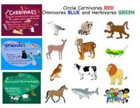 19 best images about kindergarten carnivore omnivore
