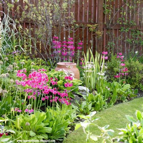 44 best images about east facing garden on pinterest gardens sun and shade plants