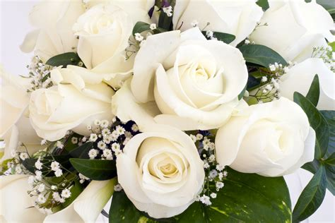 imagenes de gladiolas blancas ร ปดอกก หลาบส ขาว ดอกไม ส อร กแทนใจ ดอกก หลาบส ขาว