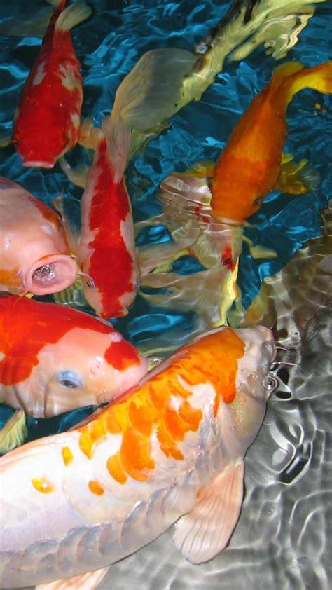 fish live wallpaper apk fish live wallpaper apk gallery