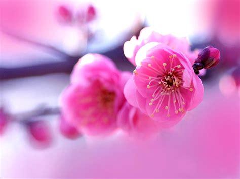 beautiful flowers wallpapers latest news beautiful flowers background hd wallpaper 8518 wallpaper