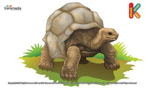 Buku Seri Mengenal Hewan Kura Kura kura kura aldabra kura kura tertua di dunia ebook anak