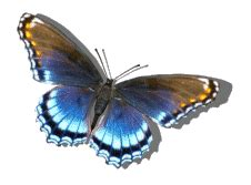 Beautiful Animated Butterfly Gif Images At Best Animations Moving Butterfly For Powerpoint