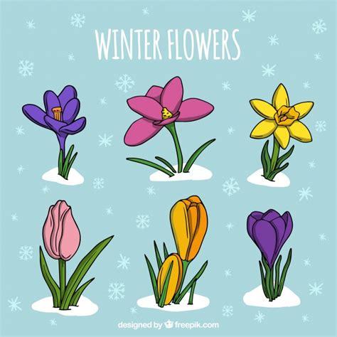 imagenes de flores invernales colecci 243 n de flores invernales dibujada a mano descargar