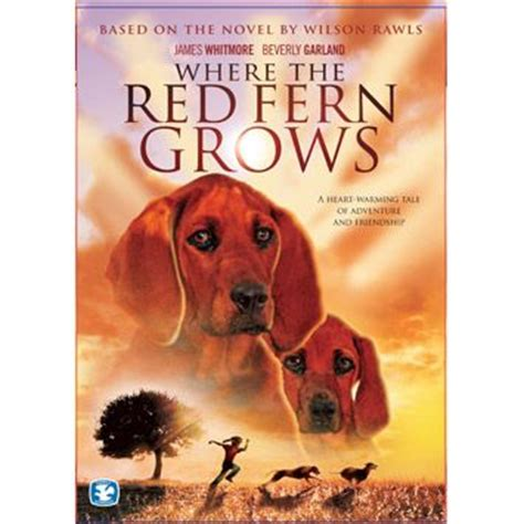 themes in the book where the red fern grows book report where the red fern grows training4thefuture