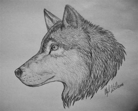 wolf drawing by epiphany48 on deviantart