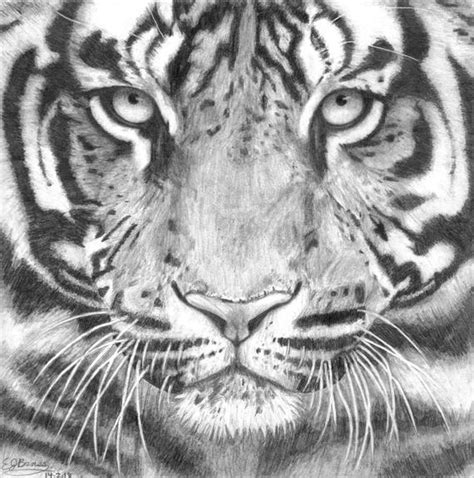 Tiger Face Black and White Realistic Pencil Drawing by ... Realistic Tiger Makeup