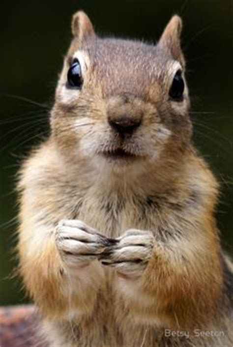 let me see you do the squirrel 1000 ideas about squirrel feeder on pinterest bird