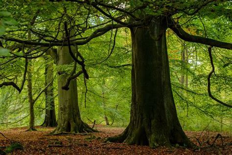 woodland tree anger plans for developers to destroy ancient