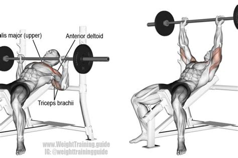 incline bench muscle group 2195 best images about fitness on pinterest shoulder