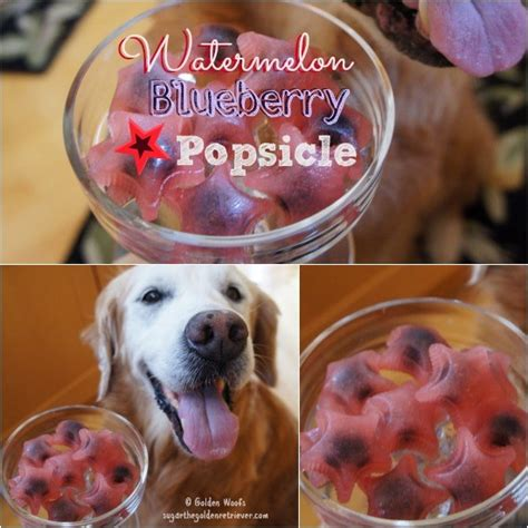 can dogs eat popsicles 5 simple friendly watermelon popsicles sugar the golden retriever