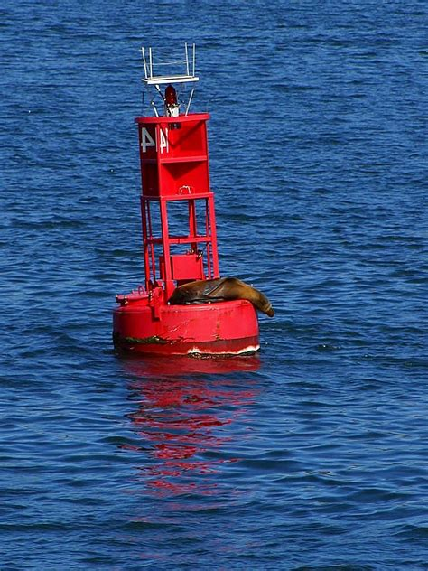 picture bouy san diego bay sea lion animal