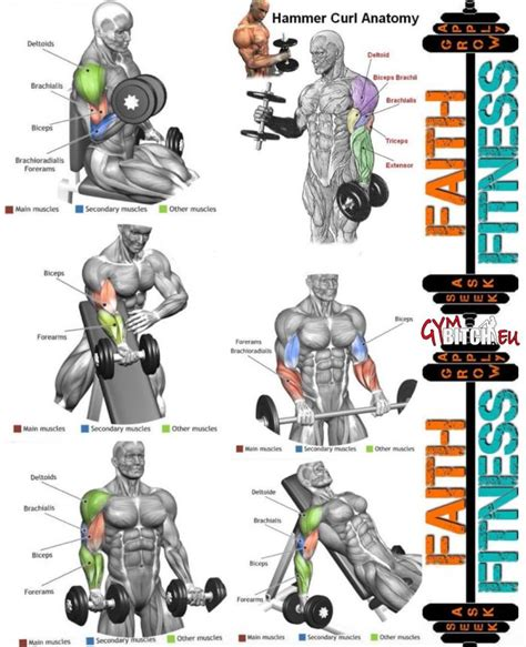 perfect biceps exercises anatomy healthy arms fitness workouts shoulders workout dumbbell