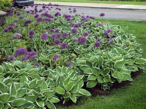 piante e fiori perenni fiori da giardino perenni fare giardinaggio fiori perenni