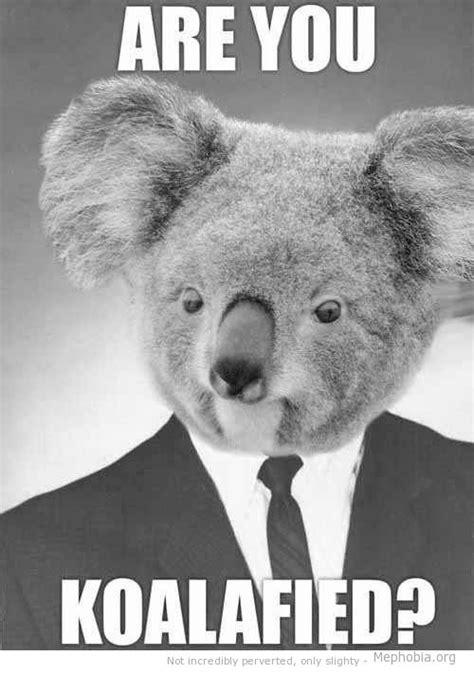 Koala Meme Generator - 85 best images about humorous hiring on pinterest