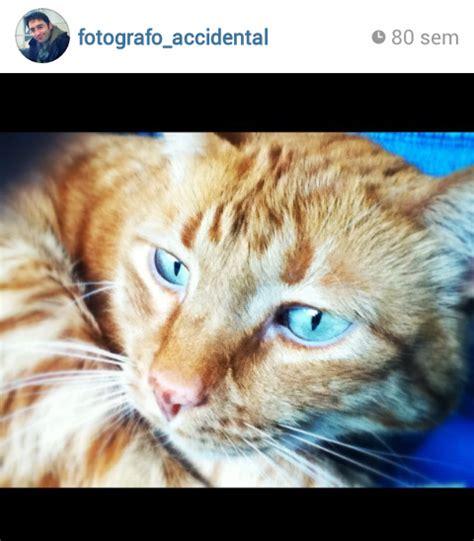 libro un gato y un blogymery libro quot un gato callejero llamado bob quot de james bowen